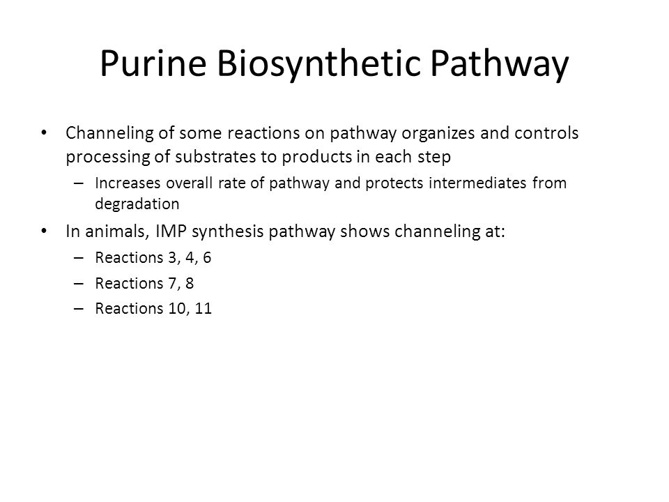 Purine Biosynthetic Pathway