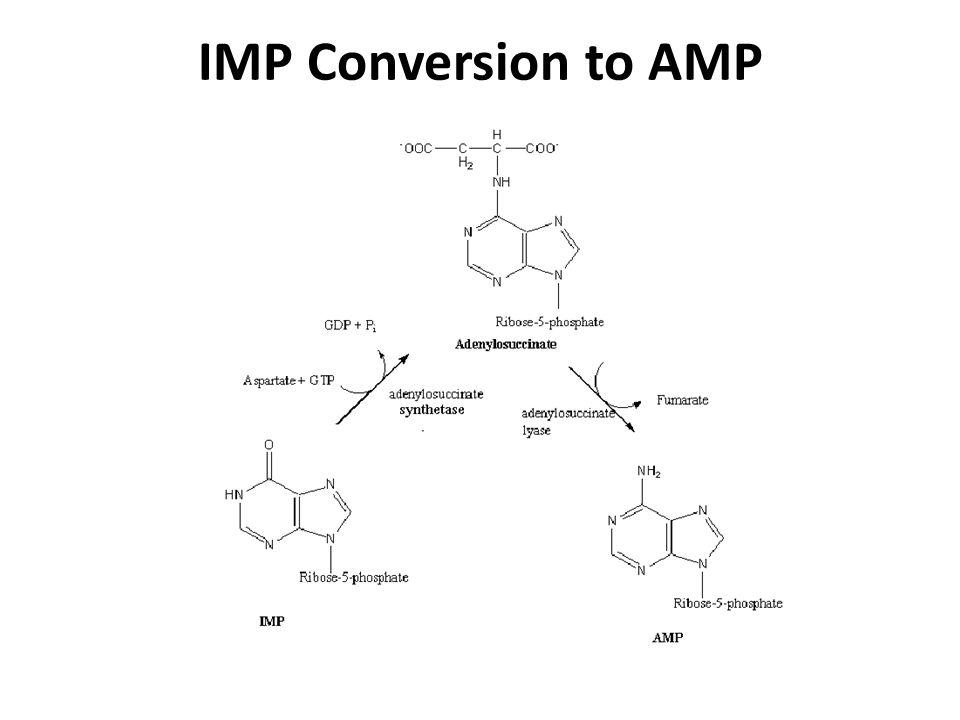 IMP Conversion to AMP