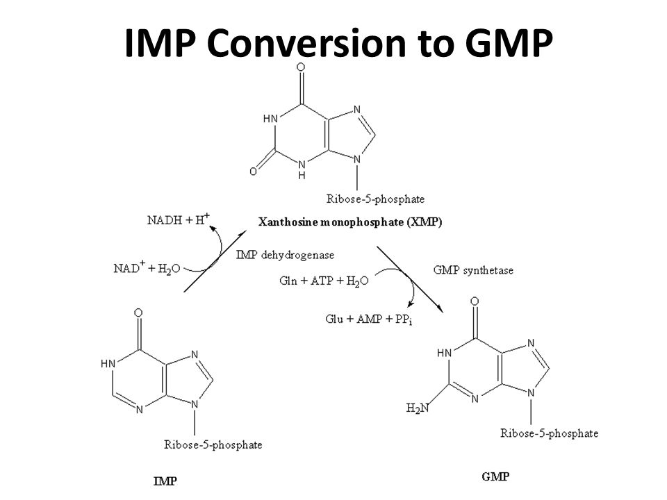 IMP Conversion to GMP