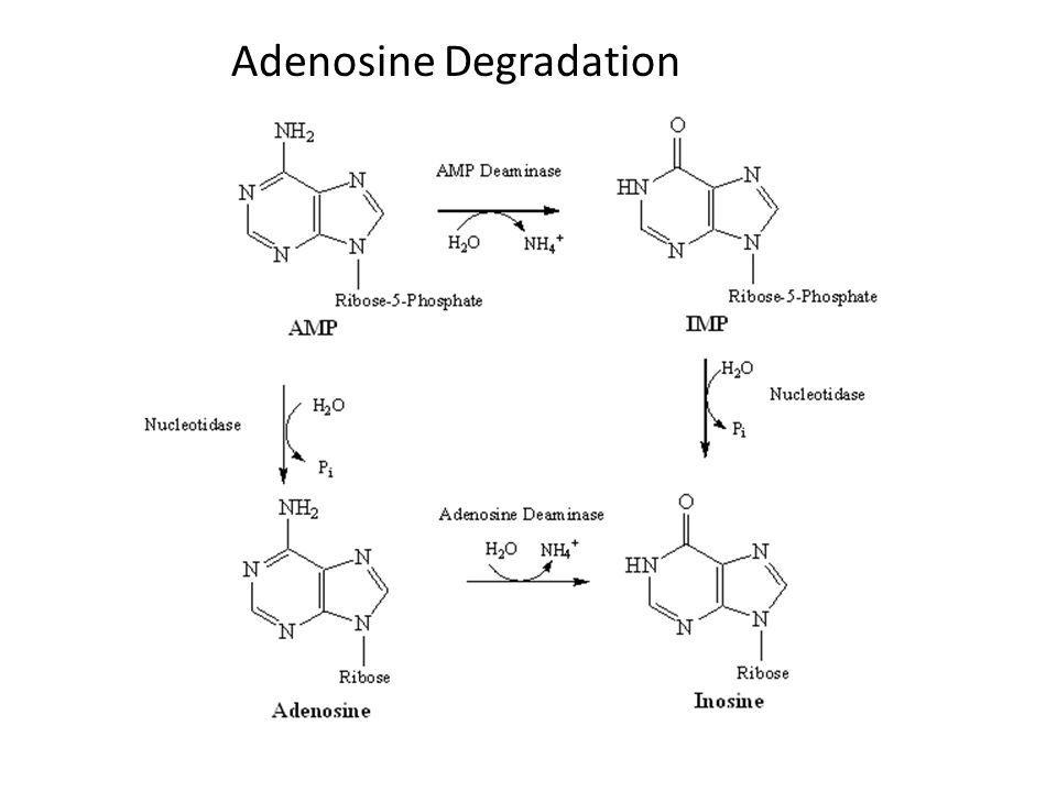 Adenosine Degradation