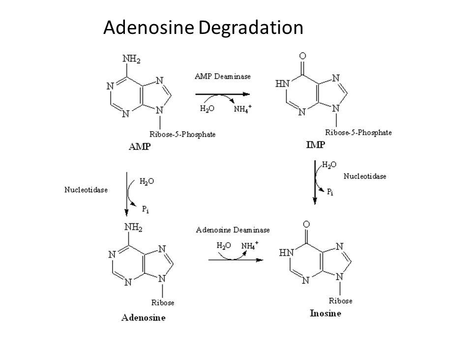 Adenosine Degradation