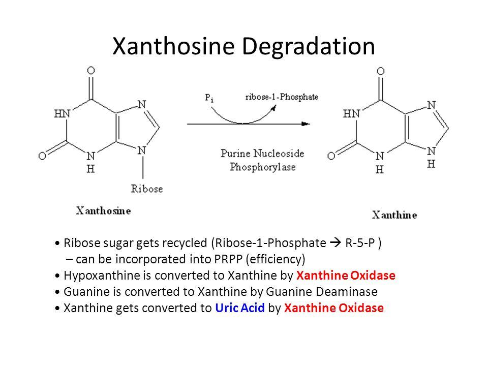 Xanthosine Degradation