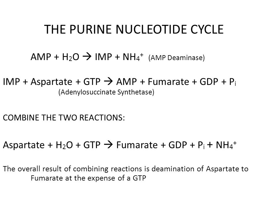 THE PURINE NUCLEOTIDE CYCLE
