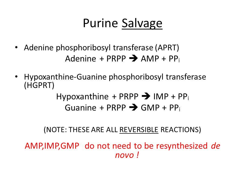 Purine Salvage Adenine + PRPP  AMP + PPi