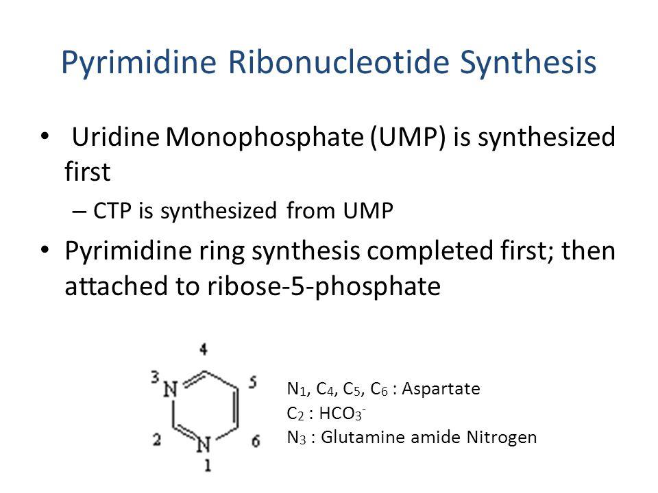 Pyrimidine Ribonucleotide Synthesis