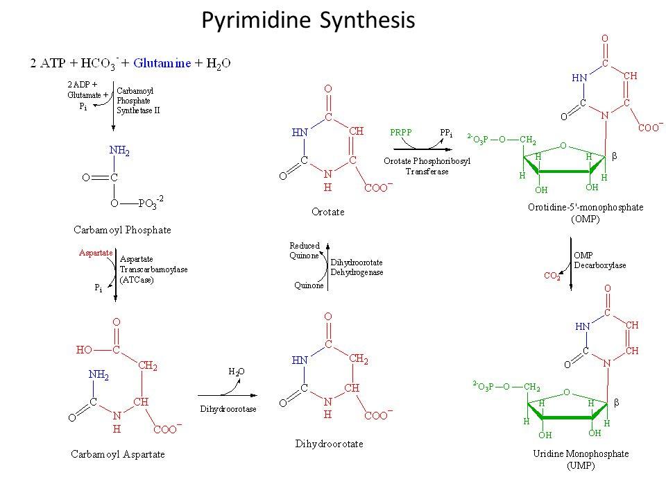 Pyrimidine Synthesis