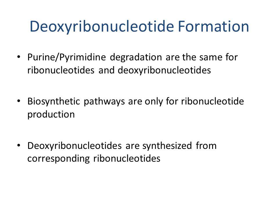 Deoxyribonucleotide Formation