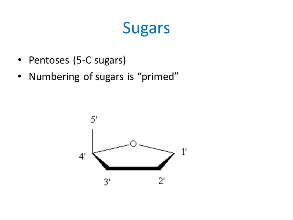Sugars Pentoses (5-C sugars) Numbering of sugars is primed