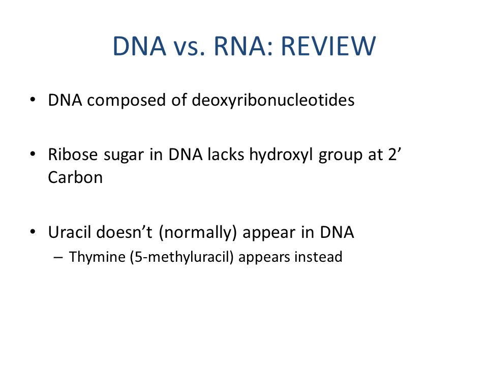 DNA vs. RNA: REVIEW DNA composed of deoxyribonucleotides