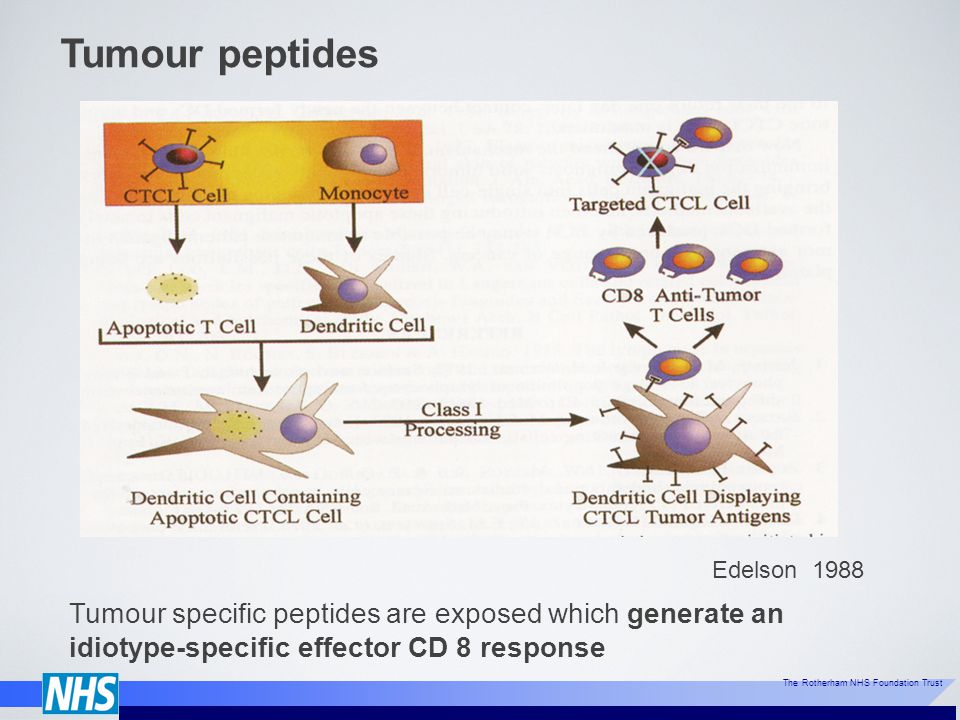 Tumour peptides Edelson 1988.