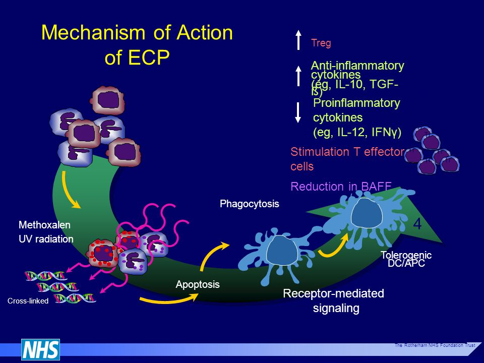 Mechanism of Action of ECP