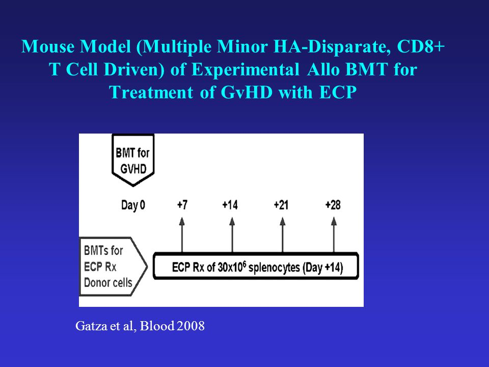Mouse Model (Multiple Minor HA-Disparate, CD8+ T Cell Driven) of Experimental Allo BMT for Treatment of GvHD with ECP