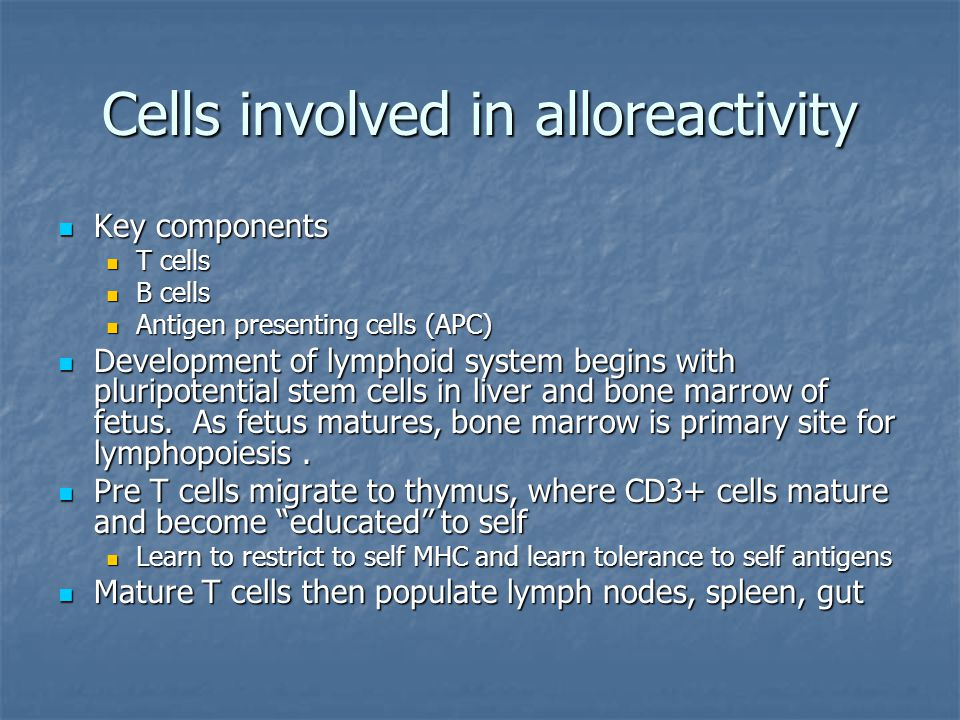Cells involved in alloreactivity