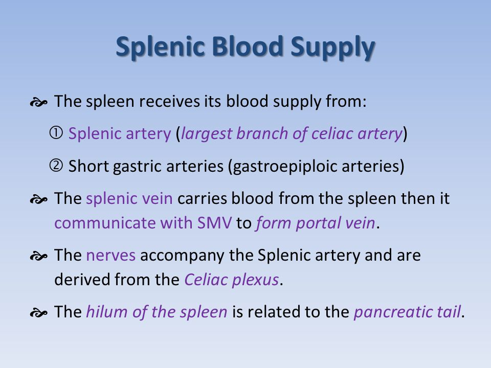 Splenic Blood Supply The spleen receives its blood supply from: