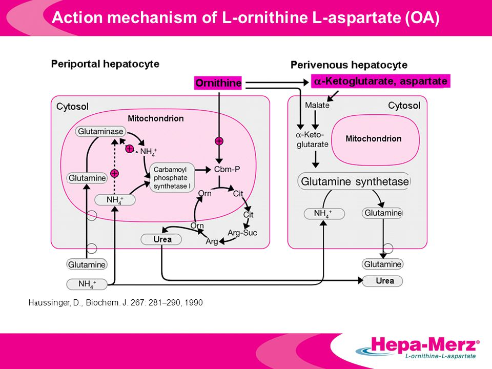 Action mechanism of L-ornithine L-aspartate (OA)