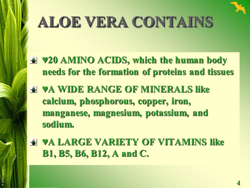 ALOE VERA CONTAINS ♥20 AMINO ACIDS, which the human body needs for the formation of proteins and tissues.