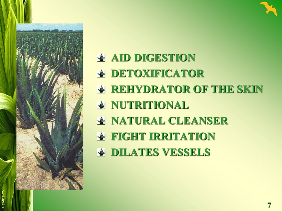 AID DIGESTION DETOXIFICATOR REHYDRATOR OF THE SKIN NUTRITIONAL