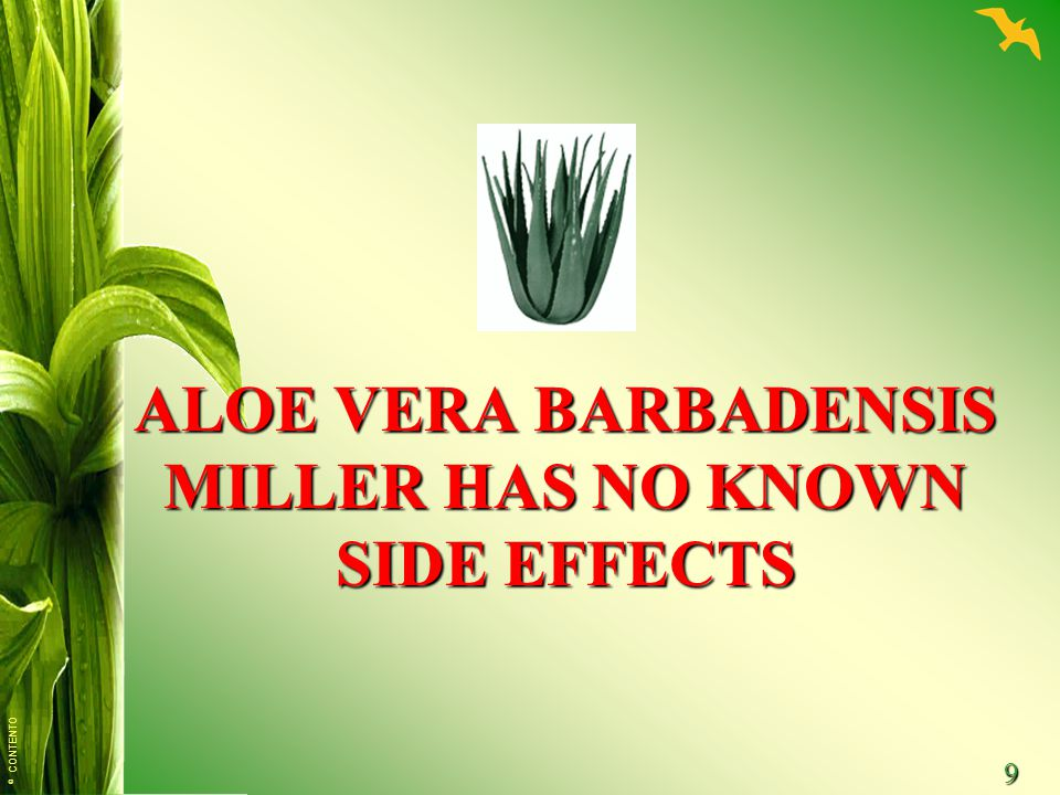 ALOE VERA BARBADENSIS MILLER HAS NO KNOWN SIDE EFFECTS