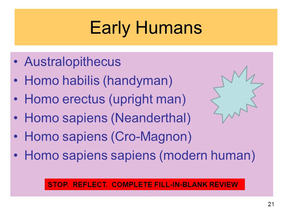 Early Humans Australopithecus Homo habilis (handyman)