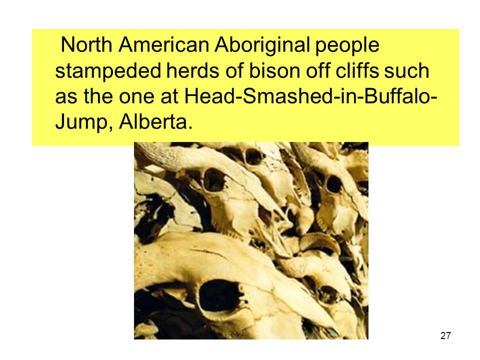 North American Aboriginal people stampeded herds of bison off cliffs such as the one at Head-Smashed-in-Buffalo-Jump, Alberta.