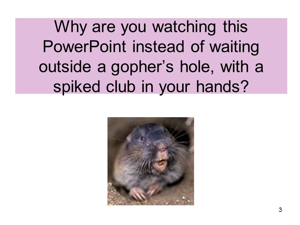 Why are you watching this PowerPoint instead of waiting outside a gopher's hole, with a spiked club in your hands
