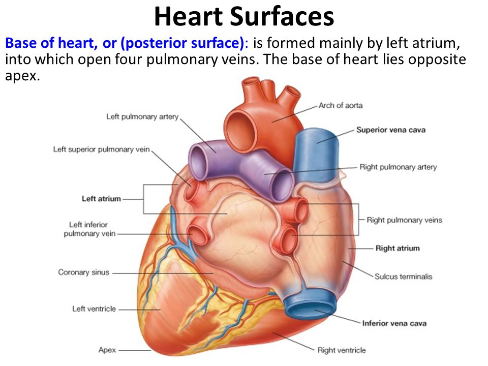 Heart Surfaces