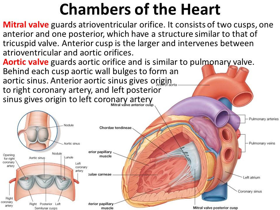 Chambers of the Heart