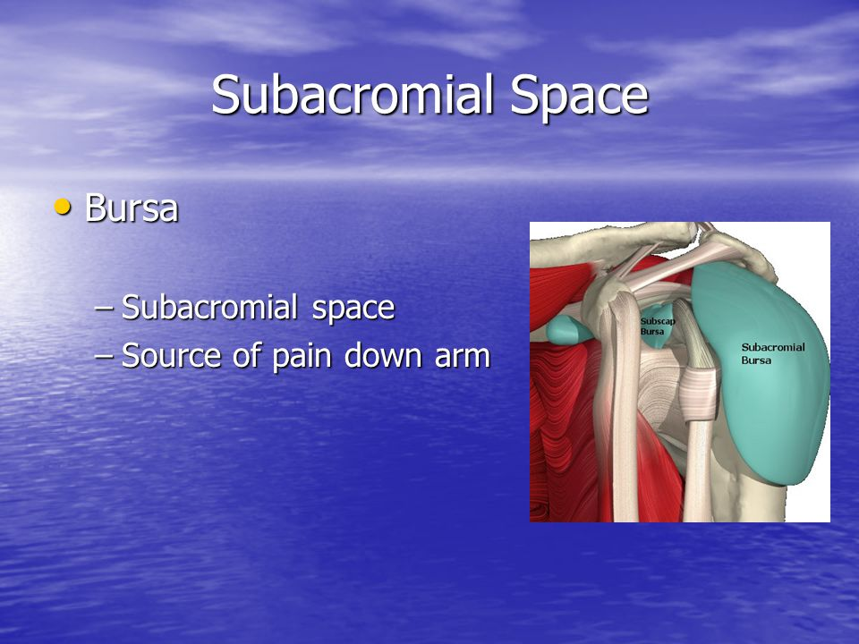 Subacromial Space Bursa Subacromial space Source of pain down arm