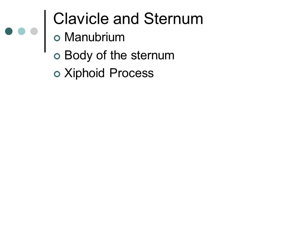 Clavicle and Sternum Manubrium Body of the sternum Xiphoid Process