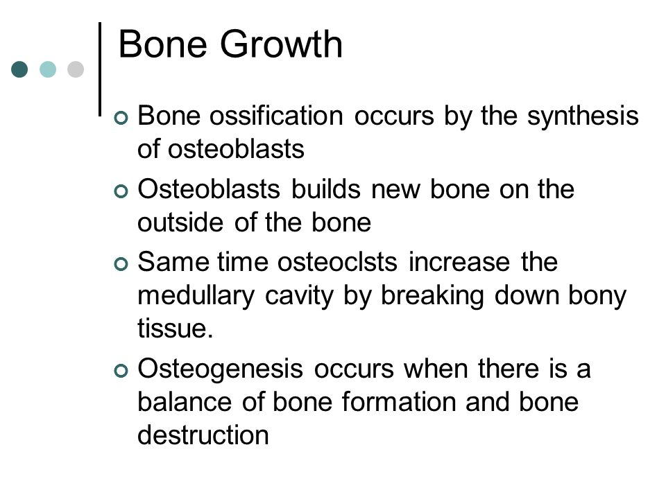 Bone Growth Bone ossification occurs by the synthesis of osteoblasts