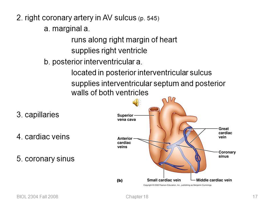 2. right coronary artery in AV sulcus (p. 545) a. marginal a