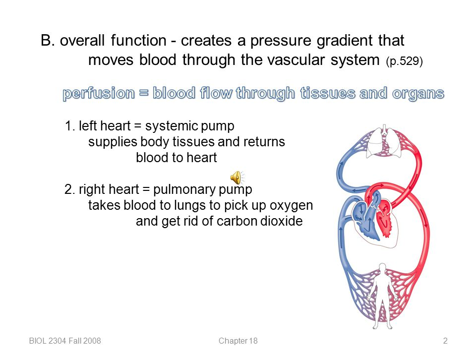 perfusion = blood flow through tissues and organs