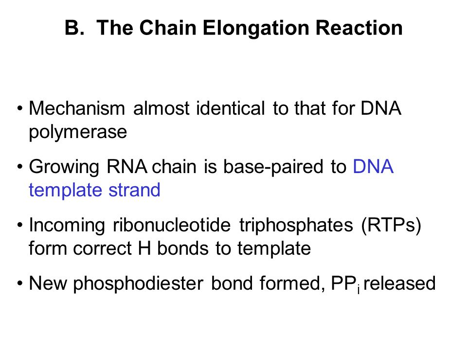 B. The Chain Elongation Reaction