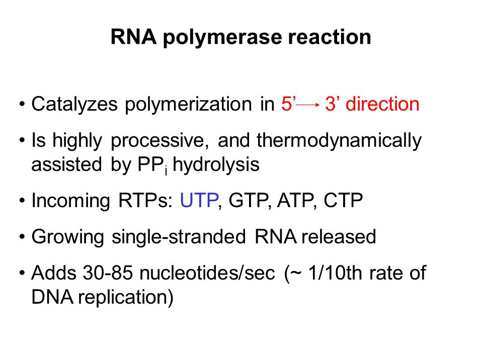 RNA polymerase reaction