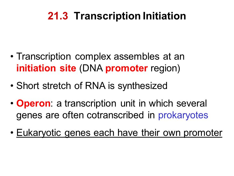 21.3 Transcription Initiation