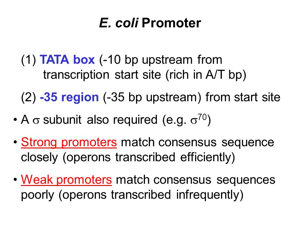 E. coli Promoter (1) TATA box (-10 bp upstream from transcription start site (rich in A/T bp)