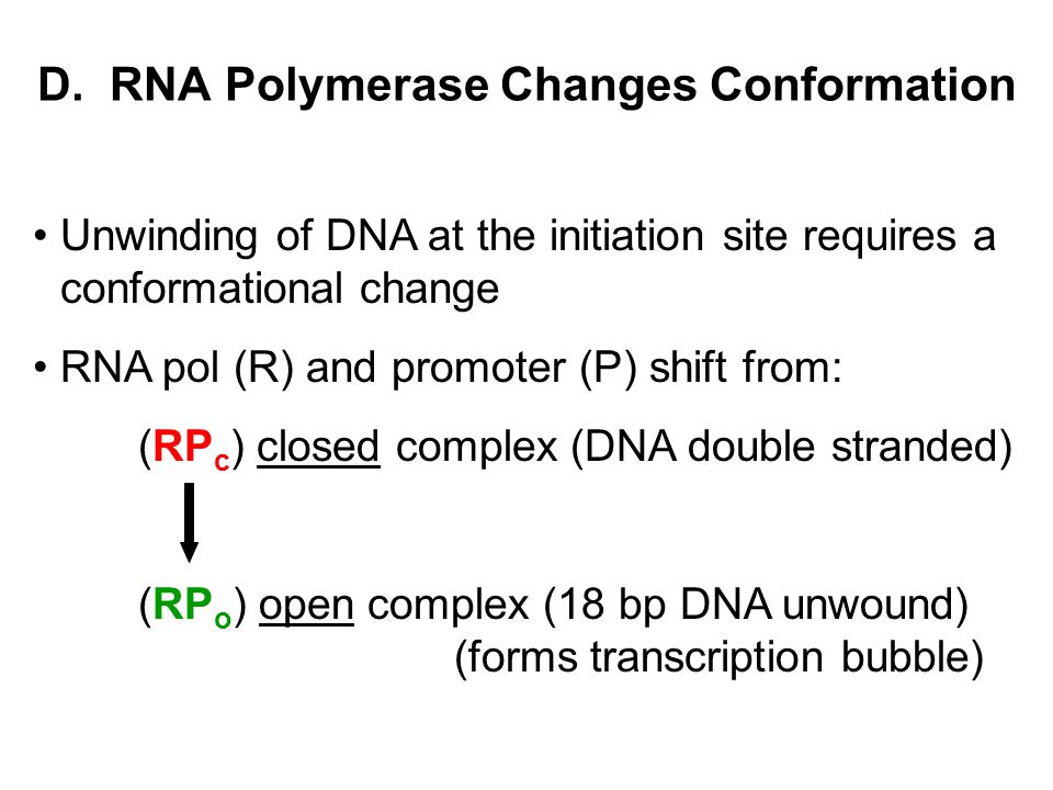 D. RNA Polymerase Changes Conformation