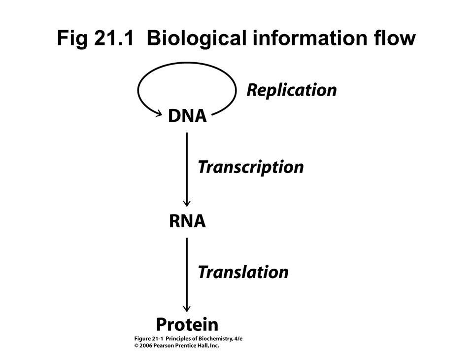Fig 21.1 Biological information flow
