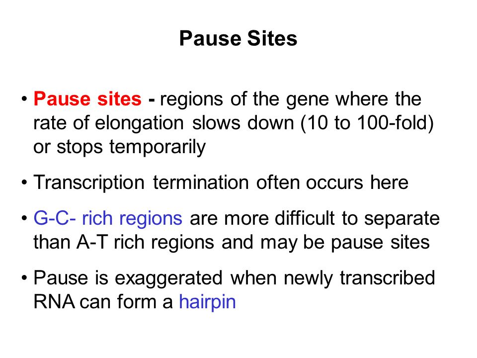 Pause Sites Pause sites - regions of the gene where the rate of elongation slows down (10 to 100-fold) or stops temporarily.