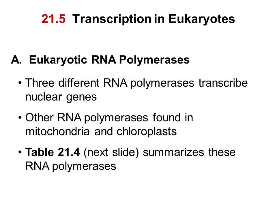 21.5 Transcription in Eukaryotes