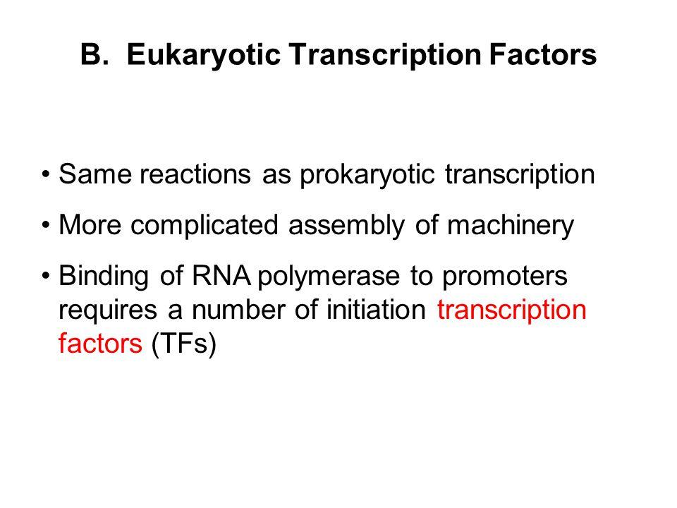 B. Eukaryotic Transcription Factors