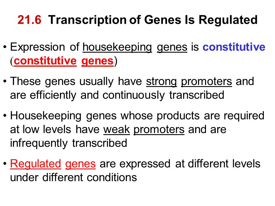 21.6 Transcription of Genes Is Regulated