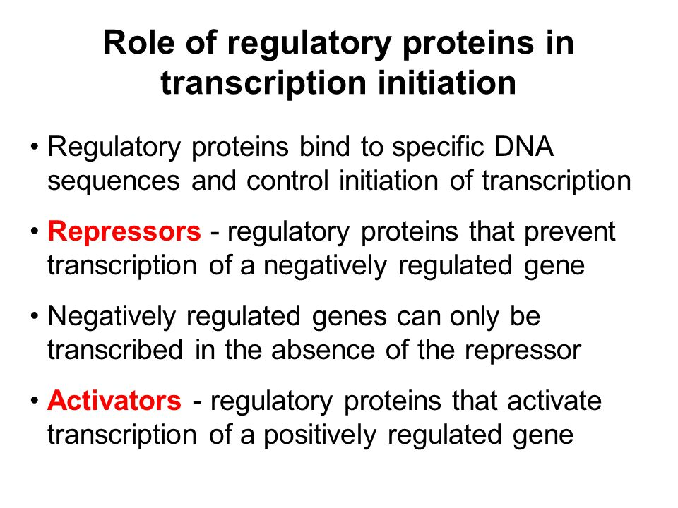 Role of regulatory proteins in transcription initiation