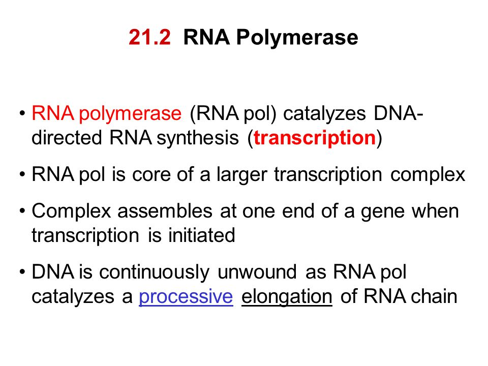 21.2 RNA Polymerase RNA polymerase (RNA pol) catalyzes DNA-directed RNA synthesis (transcription) RNA pol is core of a larger transcription complex.