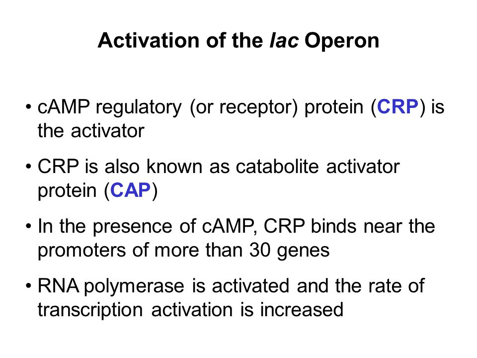 Activation of the lac Operon