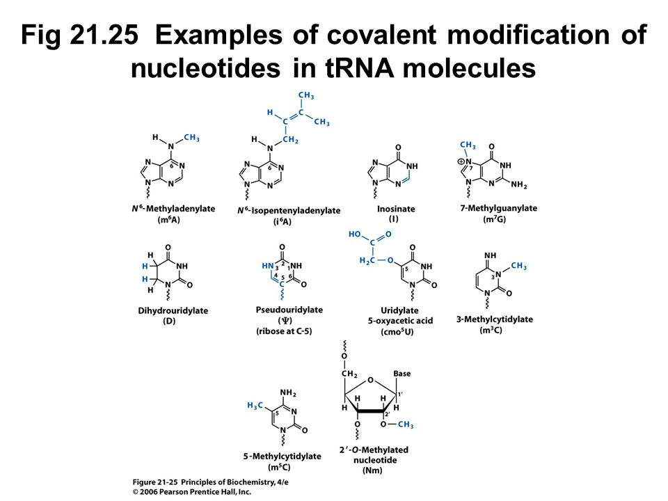 Fig 21.25 Examples of covalent modification of nucleotides in tRNA molecules