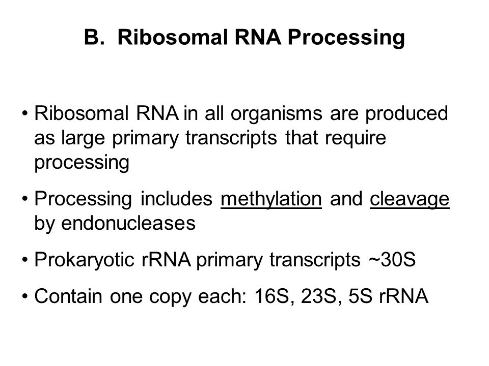 B. Ribosomal RNA Processing