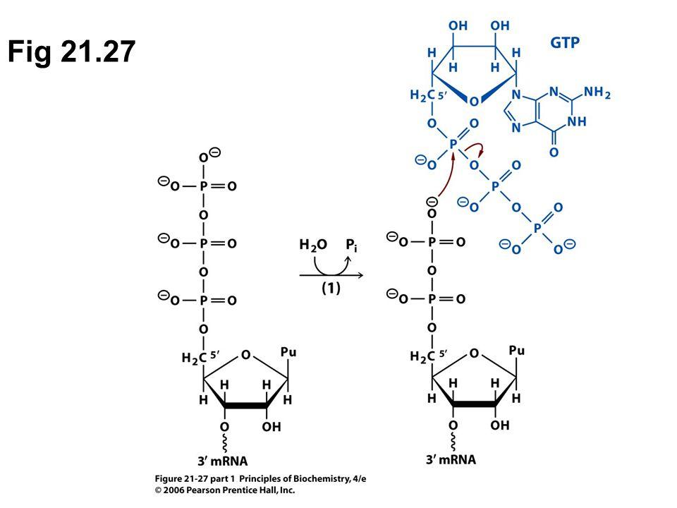 Fig 21.27 phosphohydrolase