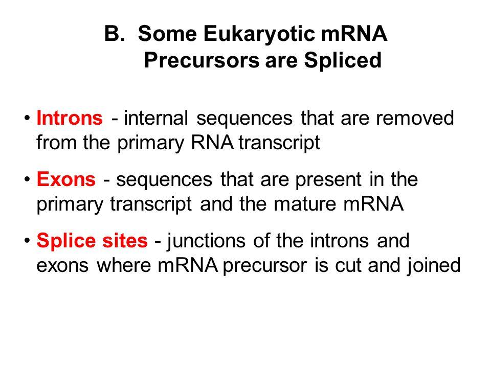 B. Some Eukaryotic mRNA Precursors are Spliced