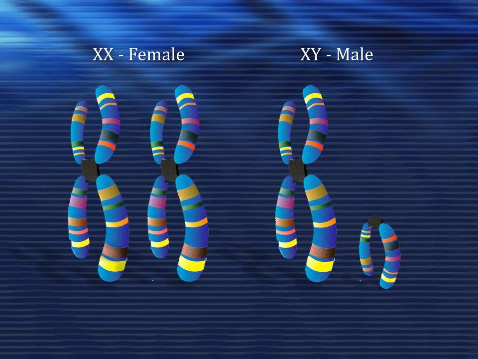 XX - Female XY - Male